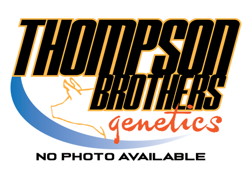 Thompson Brothers Winners